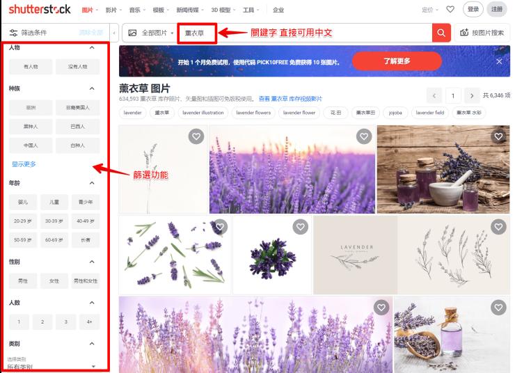 薰衣草 图片、库存照片和矢量图 _ Shutterstock