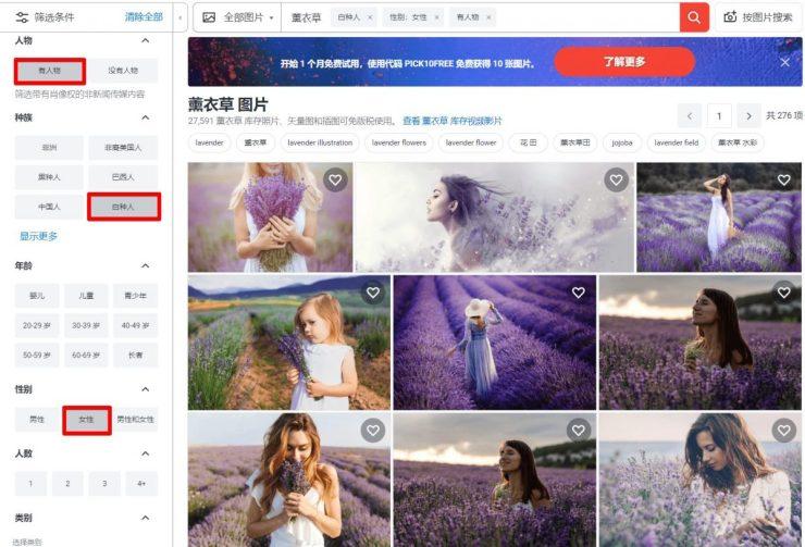 薰衣草 图片、库存照片和矢量图 _ Shutterstock2
